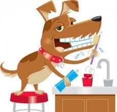 perro lavando los dientes