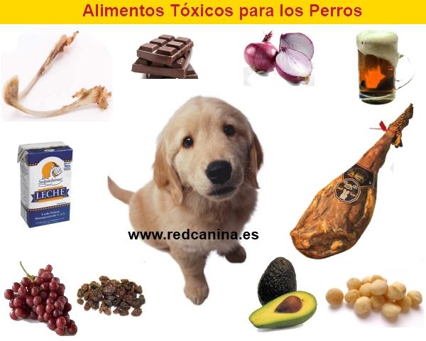 10 alimentos malos para los perros for Alimento para perros