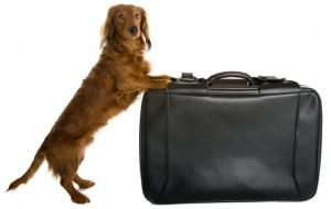 Perro-con-maleta-grande-300x190