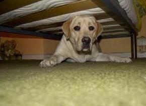 Mi perro se esconde | Urancán Sevilla - Adiestramiento y