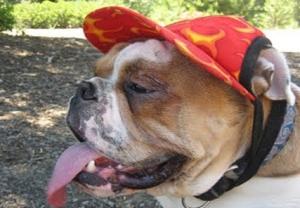 golpe de calor en los perros