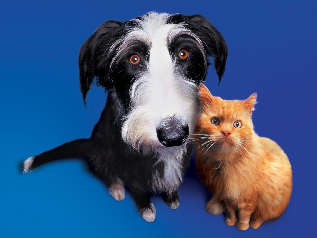 perro-con-gato
