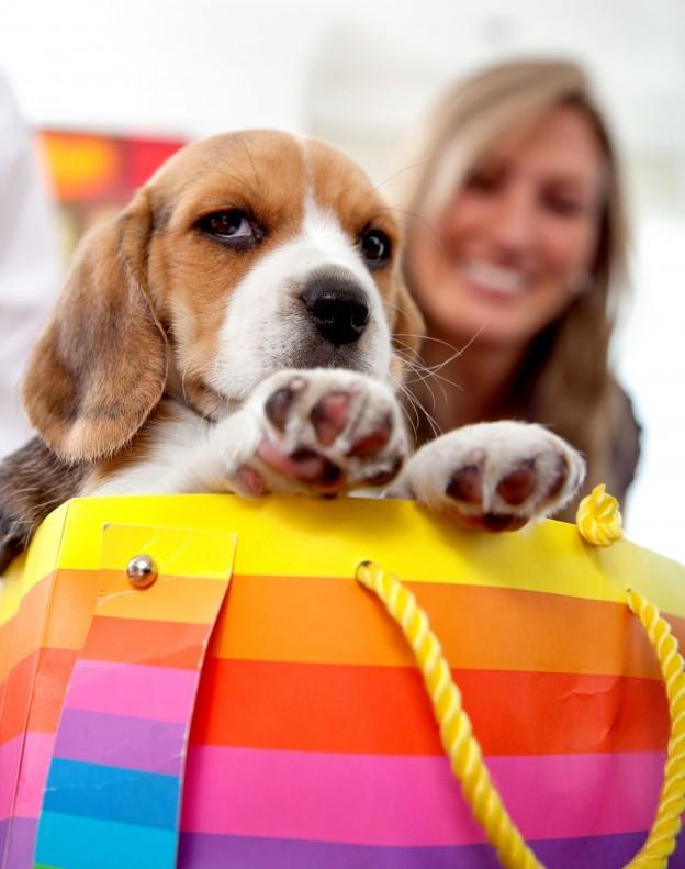 perro con maleta de colores