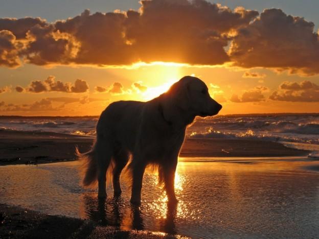 Playas para perros en Cadiz