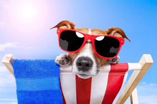 perro turista en la playa