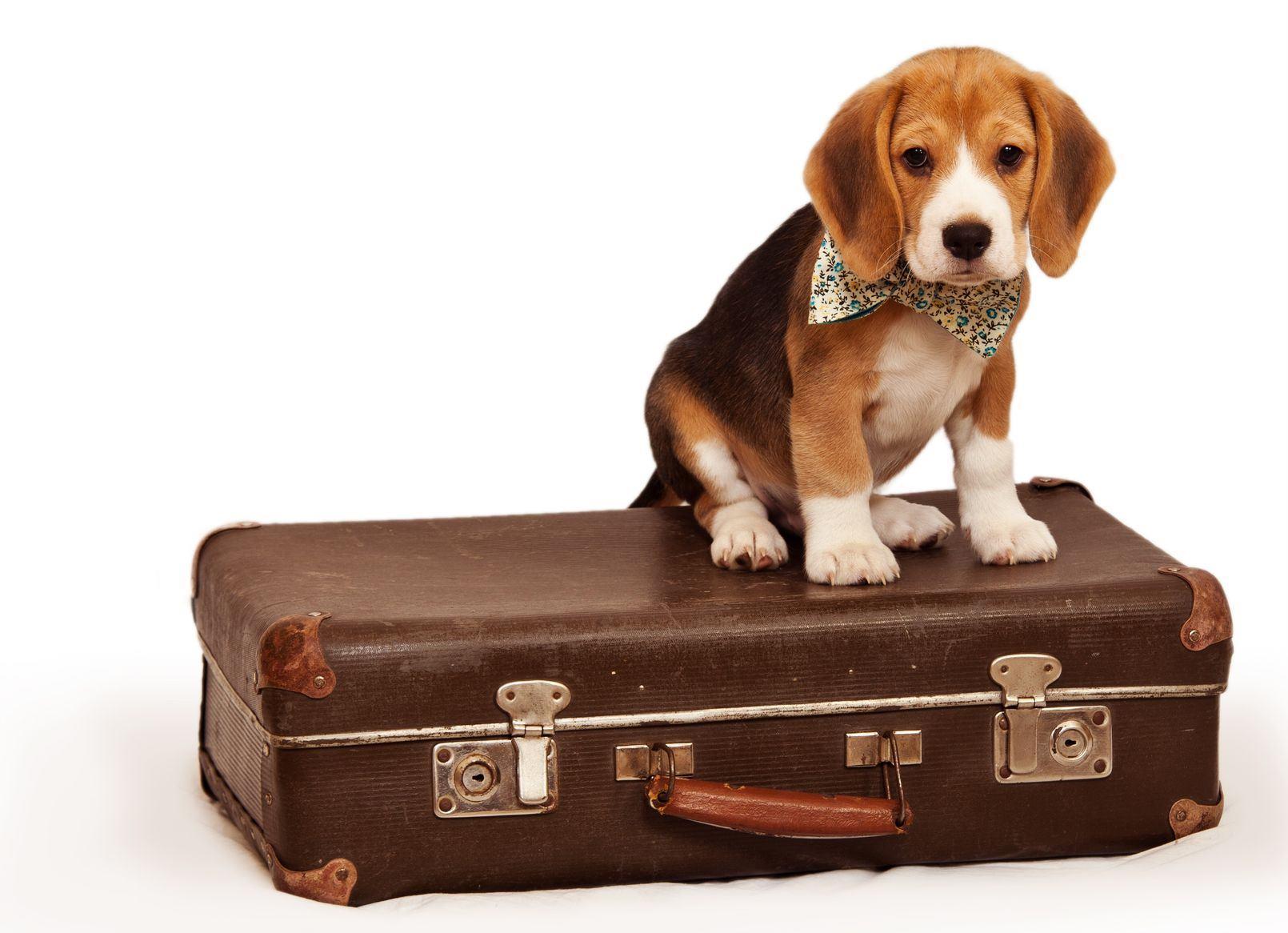 perro-de-vacaciones