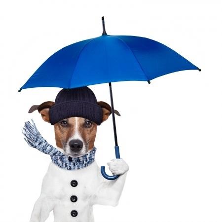Perro con Abrigo y Paraguas
