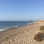 orilla-de-playa-cobaticas-para-perros-en-murcia