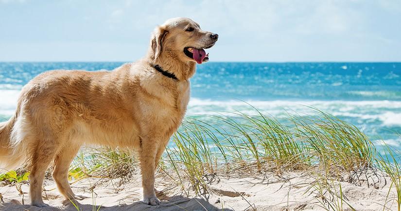 Playas para Perros en Tarragona 2016