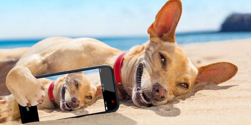 Playas para Perros en España 2016