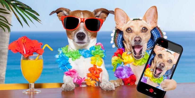 Las 7 Mejores Playas para ir con Perro este Verano 2016