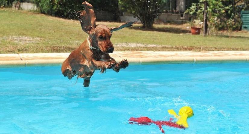 Aquapark para perros en barcelona can jan for Piscinas para perros grandes