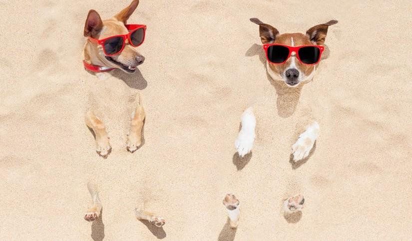 Playas para Perros en Cataluña 2016