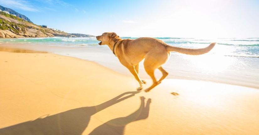 Consejos para ir a la Playa con Perro