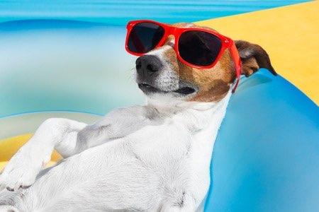 No dejes que tu perro se exponga al sol en las horas centrales del día y utiliza un protector solar como mínimo de FP30