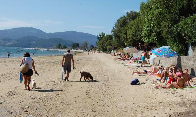 playas caninas espana 2017