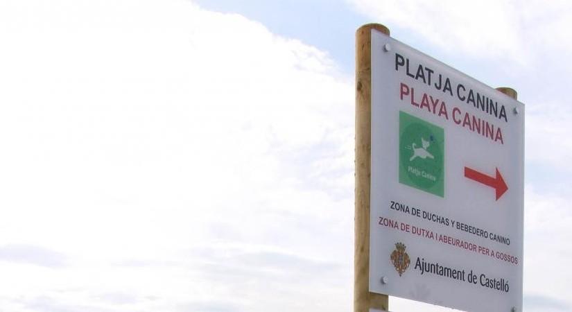 Playa para perros en Castellón